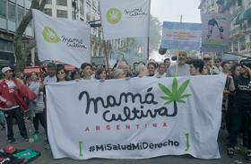 "NATIONAL GEOGRAPHIC PRESENTA: ""EXPLORER INVESTIGATION: MARIHUANA MEDICINAL"""